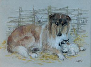 'A Collie with a Lamb' by Mabel Gear