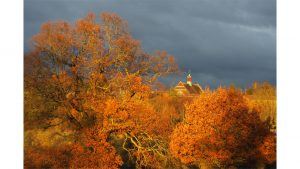 Autumn Sunburst by Geoff Hill