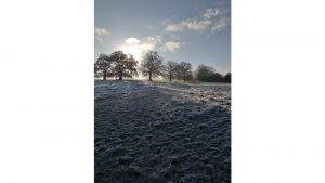 Frosty Oaks - Attenborough Fields November 2019 by Steven Knight