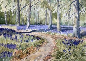 Bluebells, Whippendell Woods, 2020