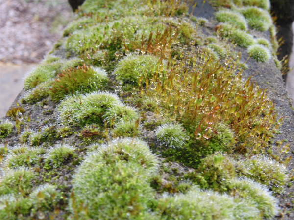 A miniature forest on a garden wall by Nick Edgeworth