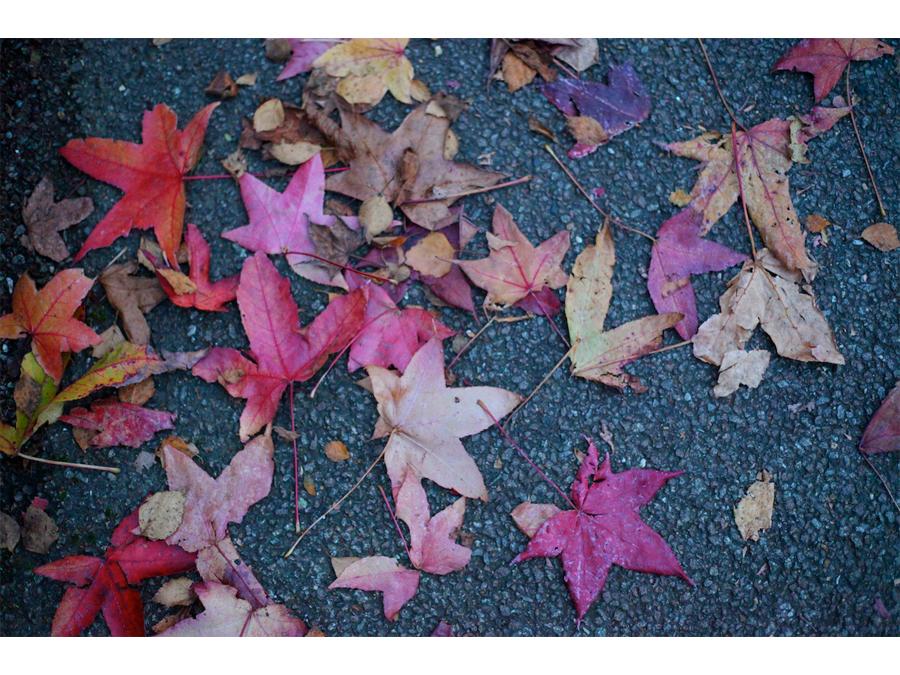 Autumn by Adrian Justins