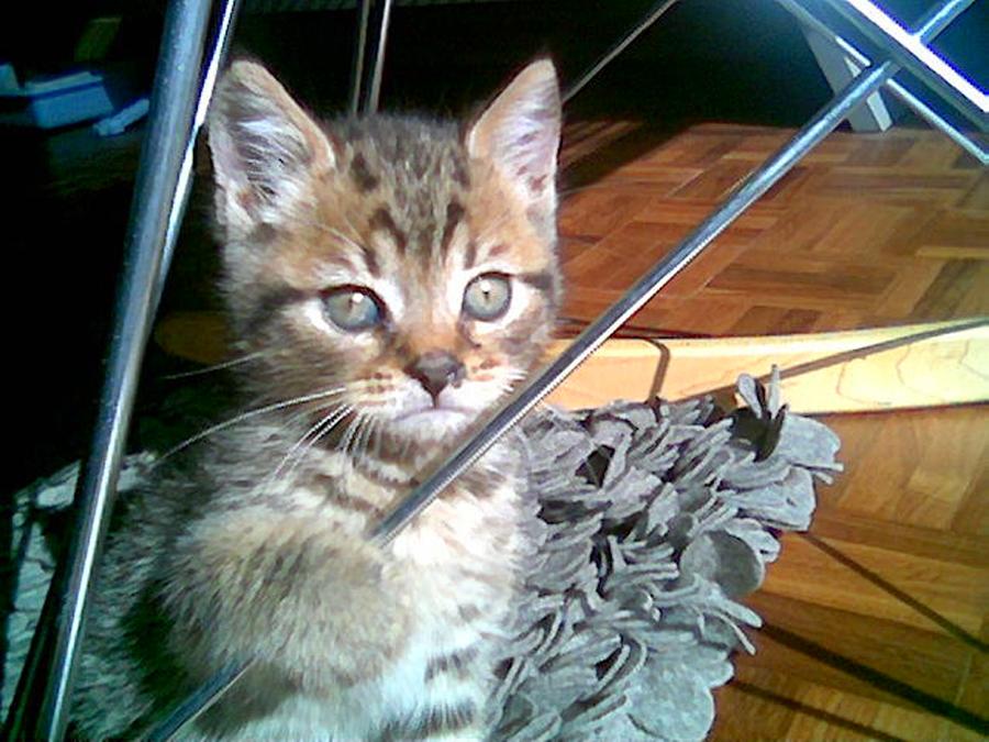 Cat a tonic by Judy Hyman