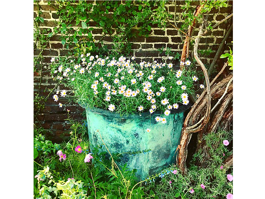 Daisies by Louise Lingwood
