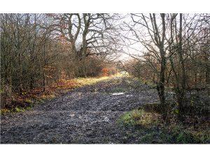 Merry Hill - Mudscape by John McCormack