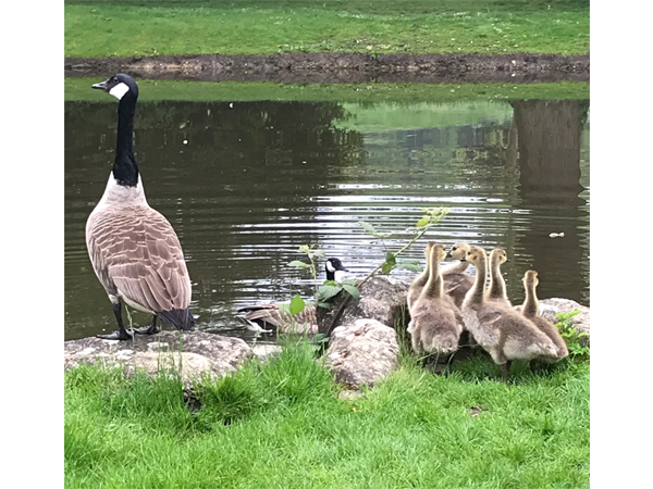 New Local Family by Melissa Frost