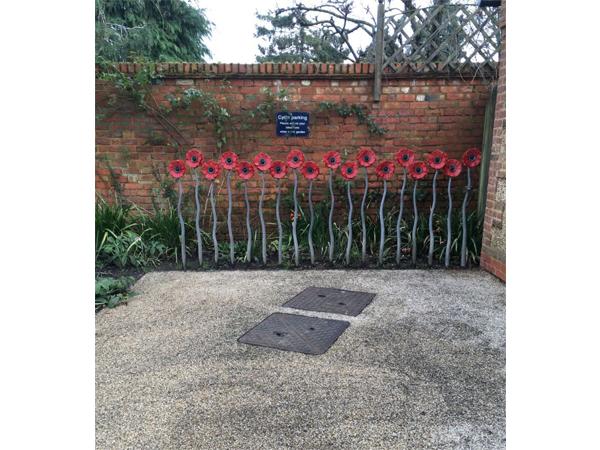 Poppies, Bushey Rose Garden by Annie Cooper