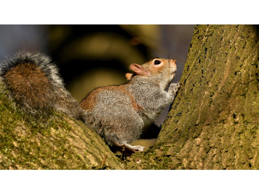 Prayer for a walnut by Monika Handke