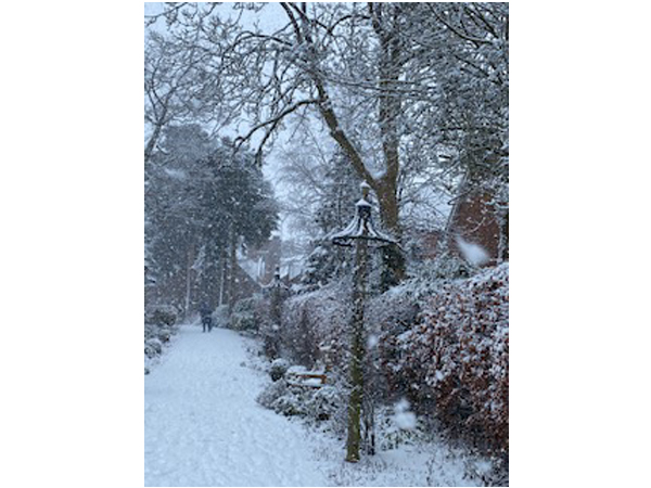 Rose Garden in the snow 2021-1 by Tracy Harrison