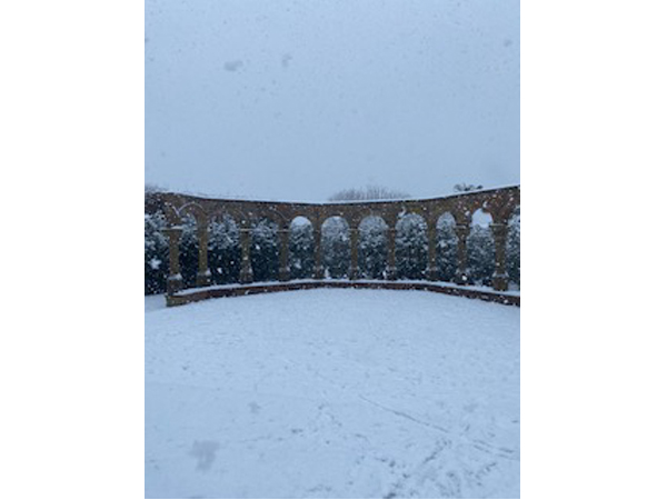Rose Garden in the snow 2021-2 by Tracy Harrison