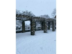 Rose Garden in the snow 2021-4 by Tracy Harrison