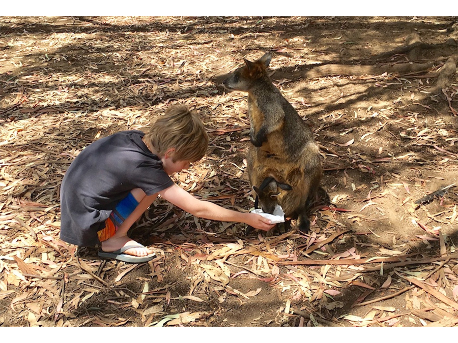 Thanks for feeding my Joey by Michael Beswick
