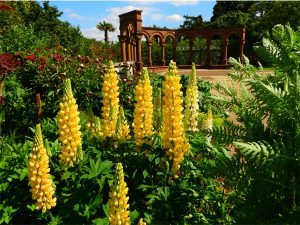 Winner - Bushey Rose Garden by Stephen Danzig